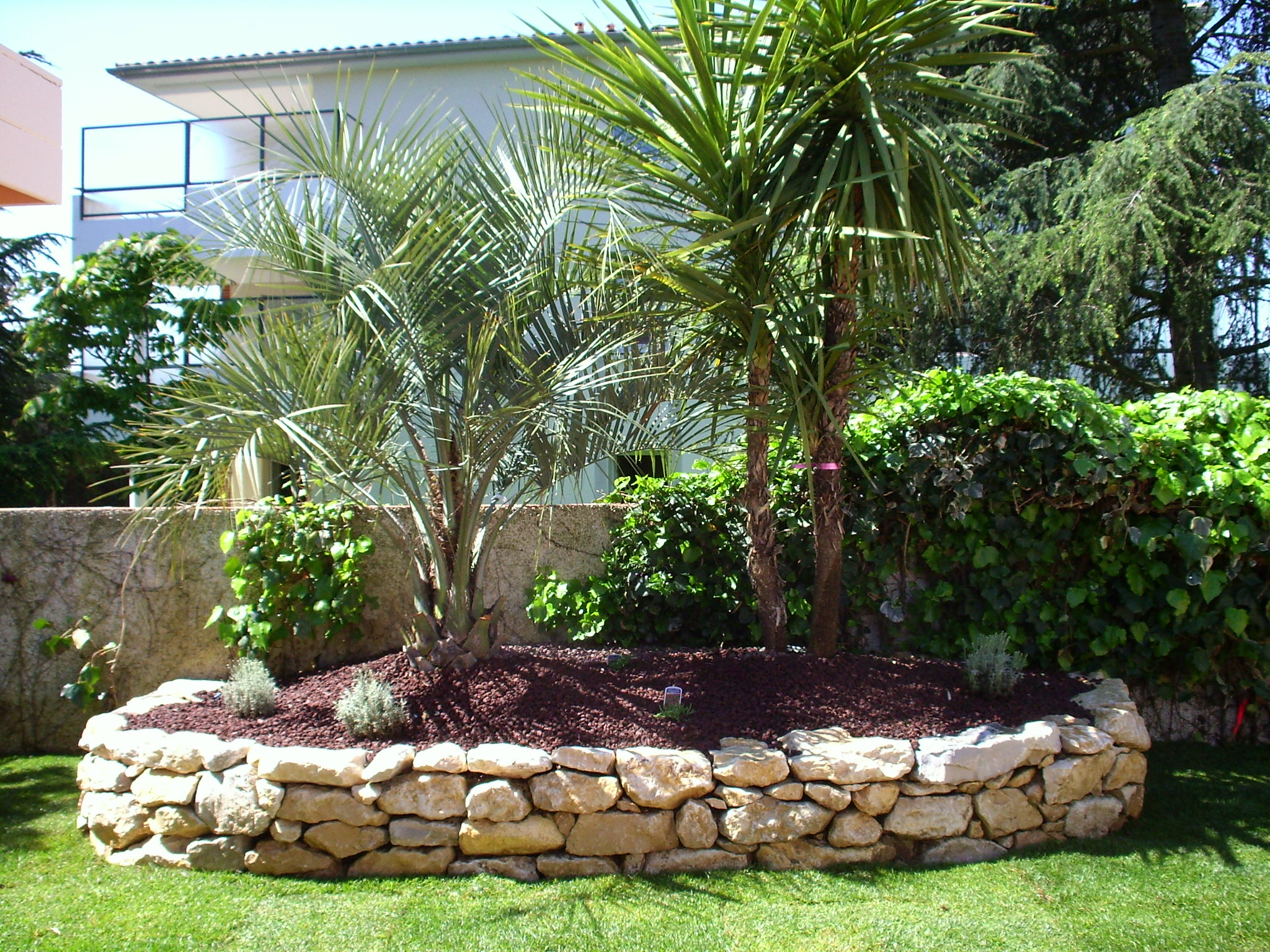 Photo jardin avec palmier d coration de maison contemporaine for Decoration jardin palmier